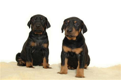 how can a puppy hold its bladder puppy bladder development