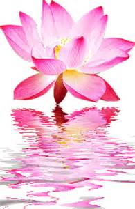 Lotus Animation Lotus Flowers As The Ultimate Symbols Could Never Protect