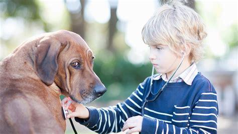 murmur in puppies murmur in dogs symptoms causes treatments finder tips