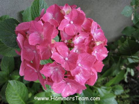 Another Last Blast Of Summer Flowers Bergen County New | another last blast of summer flowers bergen county new