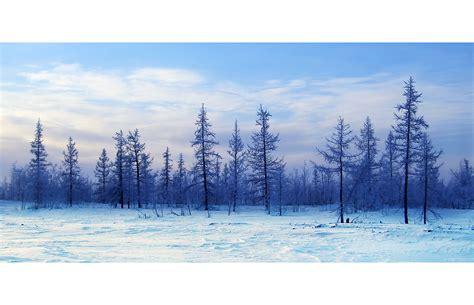 White Wall by Winterliche Tundra Tundra In Winter Foto Amp Bild Europe