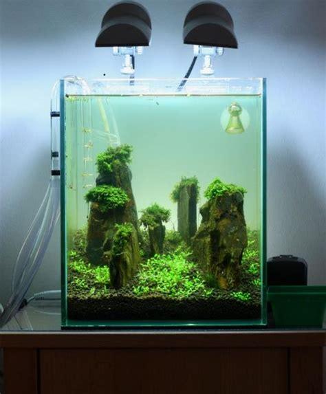 cube aquarium aquascape 20l nano cube slate iwagumi aquascaping world forum