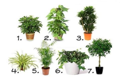 best indoor plants for no sunlight this fruit kills malignant cells of 12 different types of