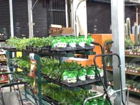 rain water barrels raised bed kits  tomato plants