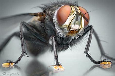 Eiger Micro Mosquito Net Black 25 beautiful macro photography smashing magazine