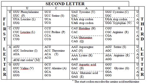 Genetic Code Table by Pin Anticodon The Genetic Code On T Rna That Fits To Codon
