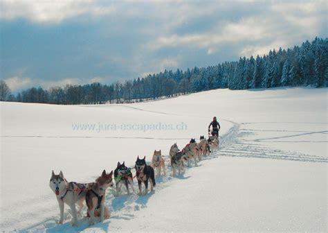 Chiens de Traîneau   Balade et initiation hiver