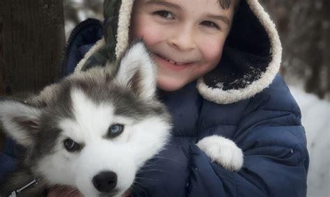 cani da appartamento adatti ai bambini razze cani taglia piccola l elenco delle razze di cani