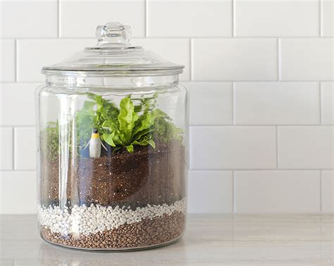 best plants for closed terrariums how to make a closed terrarium crate and barrel