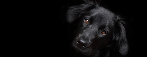 can dogs see at what can dogs see in the wag
