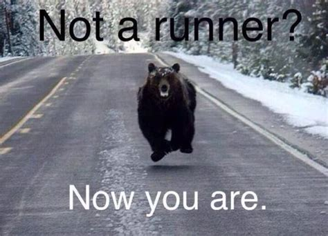 Running Bear Meme - not a runner now you are lol pinterest runners