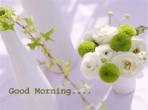 flower wallpaper with message good morning messages quotes images pics sms pictures hd