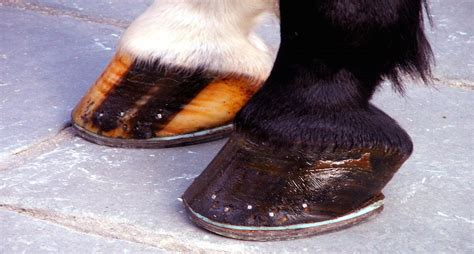 why do wear slippers why do only some horses wear shoes