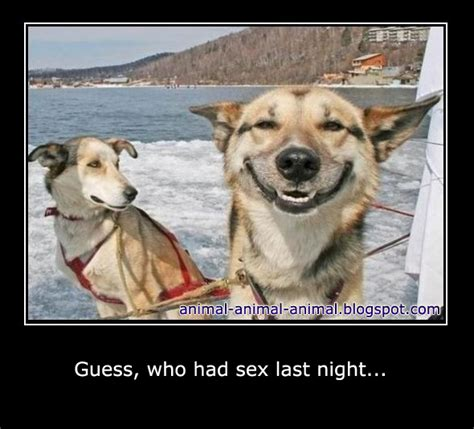 Good Sex Meme - animal animal animal february 2012