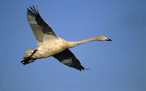 imagenes animales que vuelan 191 por qu 233 pueden volar las aves losporque