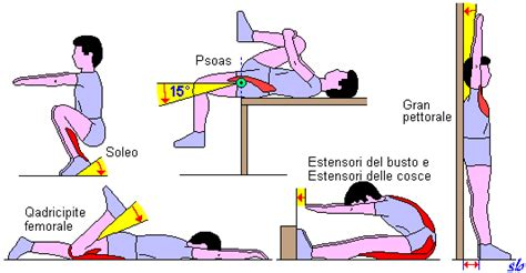 test educazione fisica programmazione dell allenamento test per la verifica