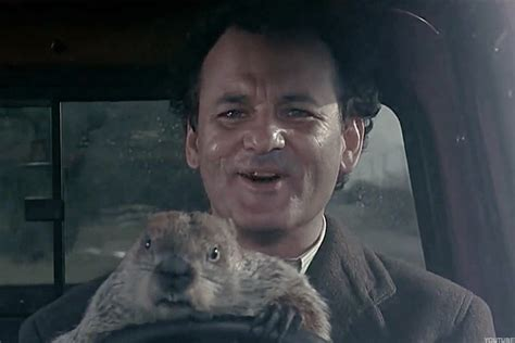 bill murray groundhog day xavier groundhog day market version has anybody seen bill