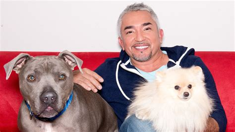 whisperer cesar millan whisperer cesar millan doesn t want to stay in studio city home cambodia