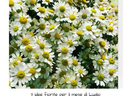 fiori mese di luglio fiori luglio archives idee fiorite