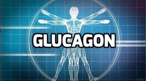 hormones  bodybuilding glucagon bodybuilding wizard