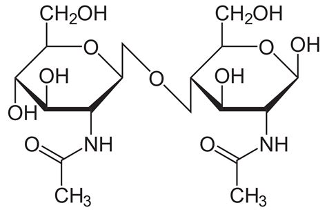 carbohydrates disaccharides disaccharides