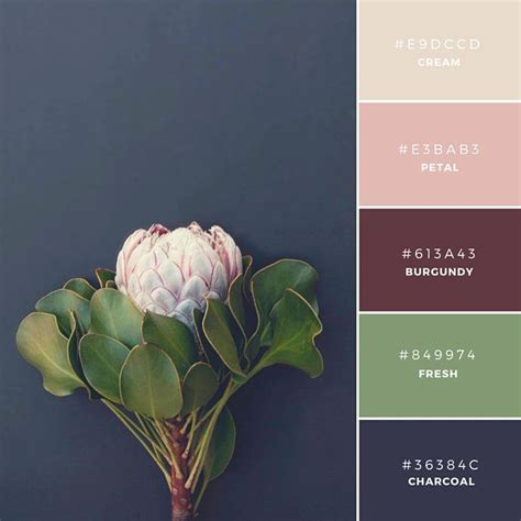 color palette ideas best 25 color schemes ideas on color palettes