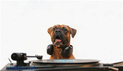 djs dogs dj the barking beats xcitefun net