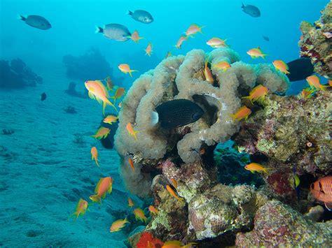 aqaba dive snorkeling in aqaba travels with darley