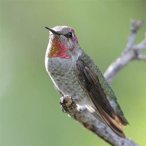 birdweb larger image