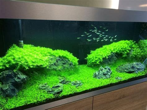 1000 ideas about aquascaping on aquarium