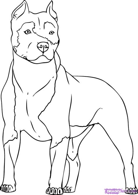 free pitbull dog pitbull dog coloring pages