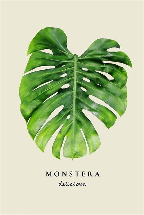printable leaf art quot monstera print monstera wall art monstera leaf art