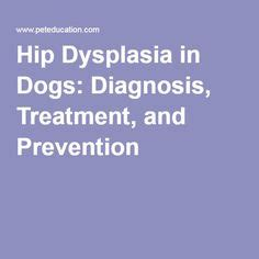 1000 ideas about hip dysplasia on hip