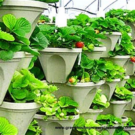 Vertical Gardening Strawberries Vertical Gardening Systems Hydroponic Strawberry
