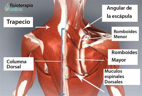 nudo muscular espalda fisiocus on twitter quot 191 qu 233 es la dorsalgia causas