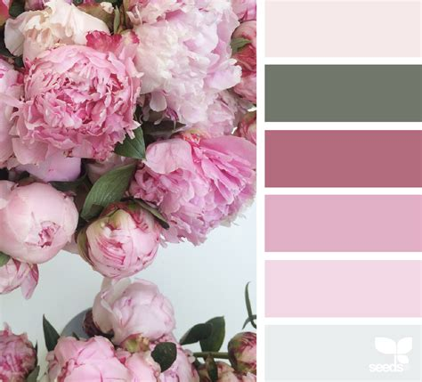 peony color peony palette design seeds