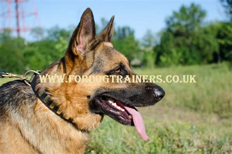 german shepherd collars german shepherd collars for sale with brass plates new
