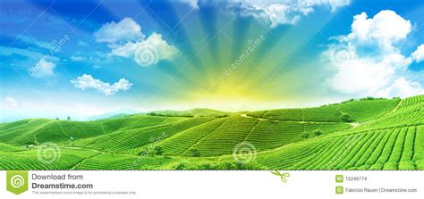 Free Landscape Design App Green Fields At Sunrise Stock Images Image 15246774