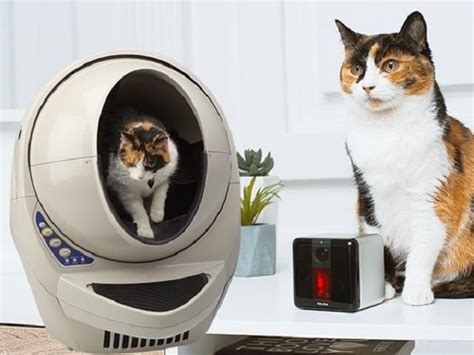 Womans World Sweepstakes - litter robot sweepstakes freebies ninja