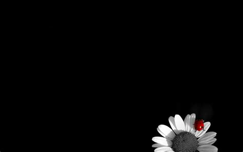 black and white wallpaper black and white flower wallpaper hd for desktop 3