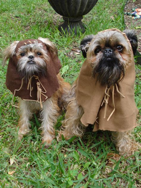 ewok costume for ewok costume on brussels griffon puppies griffon bruxellois and