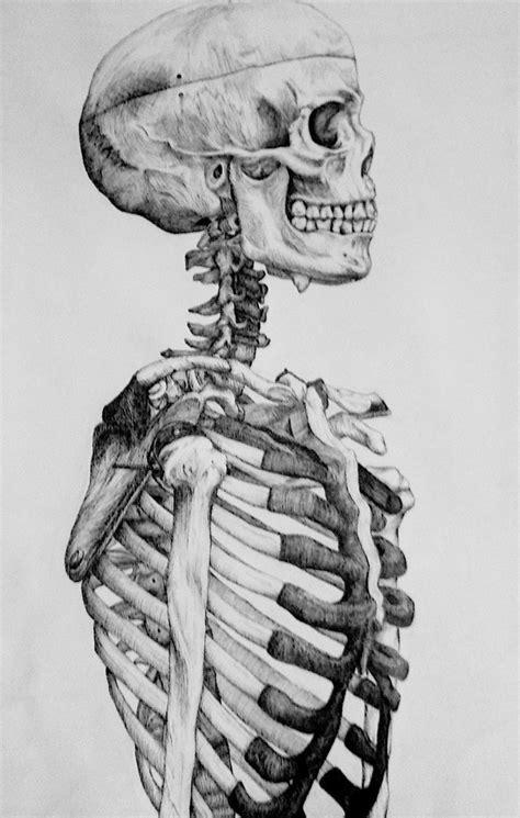 skeletal side profile exposed skulls bones skeletons
