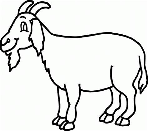 mewarnai gambar kambing berjenggot senyum tipis contoh anak paud