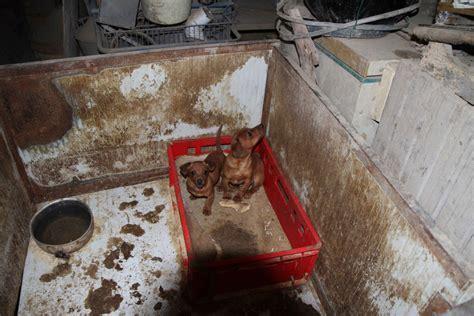 allevamento di casa sigilli centopercentoanimalisti 171 cani sequestrati dall