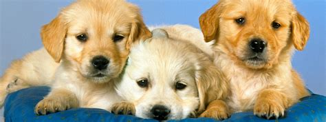 puppy obedience school near me lazy inn resources for in business