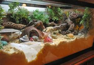 Reptile Habitat Decor 25 Best Ideas About Hermit Crab Tank On Pinterest