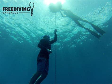 dive barbados freediving in barbados barbados org