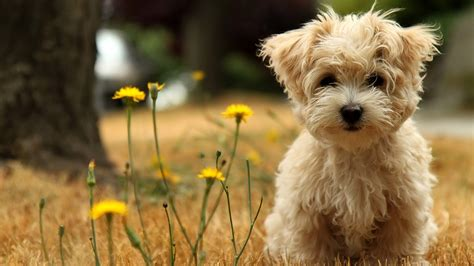 dog wallpapers dog wallpaper 12