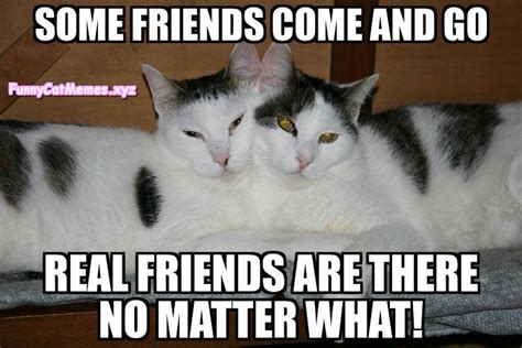 Real Friends Meme - real friends are there no matter what funny cat meme