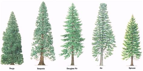 28 tree types how many different types of trees are